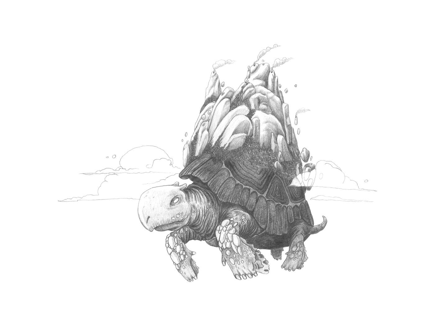bozza-tartaruga2